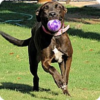 Adopt A Pet :: PRINCESS BAILEY - Phoenix, AZ