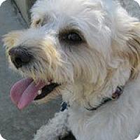 Adopt A Pet :: Yogi - La Costa, CA