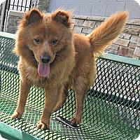 Adopt A Pet :: Ryker - white settlment, TX