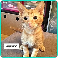 Adopt A Pet :: Jupiter - Miami, FL