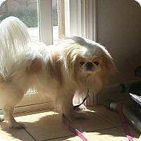 Adopt A Pet :: Yoshi - Westley, CA
