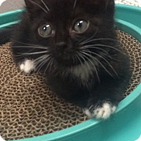 Adopt A Pet :: Google - Long Beach, NY