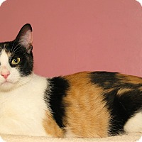 Adopt A Pet :: Tazz and Jinx - Milford, MA
