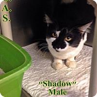 Adopt A Pet :: T-5 Shadow - Triadelphia, WV