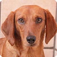 Adopt A Pet :: Dodie - Rossville, TN