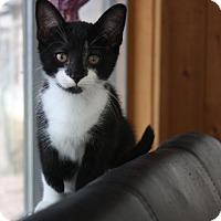Adopt A Pet :: Wesley - Warren, OH