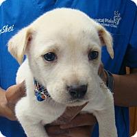 Adopt A Pet :: Theodore - Wharton, TX