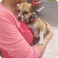 Adopt A Pet :: MARNY - Phoenix, AZ