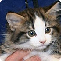 Adopt A Pet :: Sarah - Wildomar, CA