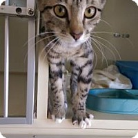 Adopt A Pet :: Daisy - Fort Collins, CO