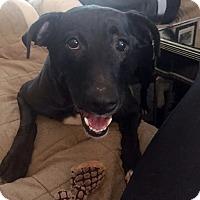 Adopt A Pet :: Maddie - Detroit, MI