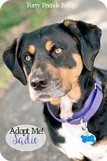 Beagle Mix Dog for adoption in West Des Moines, Iowa - Sadie