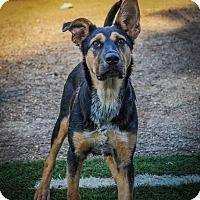 Adopt A Pet :: Candi - Gilmer, TX