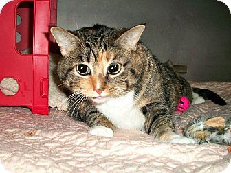 Domestic Shorthair Cat for adoption in Flint, Michigan - Karen
