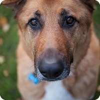 Adopt A Pet :: Sarge (foster dog) - Portland, OR