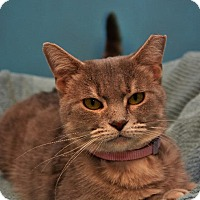 Adopt A Pet :: Carrie - Cincinnati, OH
