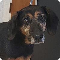 Adopt A Pet :: Nikki - Bloomington, IL