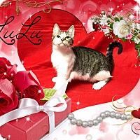 Adopt A Pet :: Lulu - Davison, MI