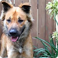 Adopt A Pet :: Clifton - Los Angeles, CA