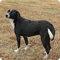 Adopt A Pet :: Jocie - Savannah, TN