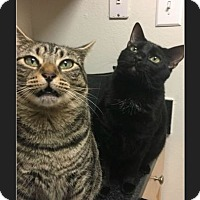 Adopt A Pet :: Truffles and Chowder - Waldorf, MD