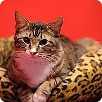 Adopt A Pet :: Brenna - Topeka, KS