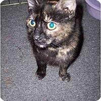 Adopt A Pet :: Melanie & Toonces - Delmont, PA