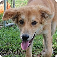 Adopt A Pet :: Quarter - Foster, RI