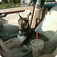 Adopt A Pet :: **Baxter** - Rockaway, NJ