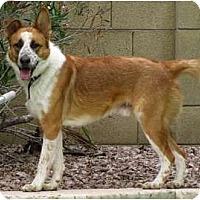 Adopt A Pet :: HOSS - Phoenix, AZ