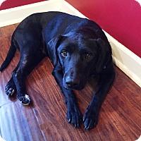 Adopt A Pet :: Stacy - Cumming, GA