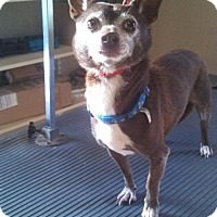 Adopt A Pet :: Snickers - Mooresville, NC