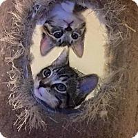Adopt A Pet :: Crystal - Muskegon, MI