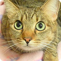 Adopt A Pet :: Noel- RC PetSmart - Rancho Cucamonga, CA