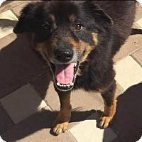 Adopt A Pet :: Millie - Fort Lauderdale, FL