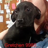 Adopt A Pet :: Gretchen - baltimore, MD