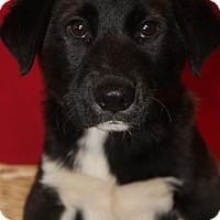 Adopt A Pet :: Brady - Waldorf, MD