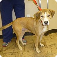 Adopt A Pet :: Kassey - Oviedo, FL