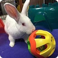 Adopt A Pet :: Carlton - Woburn, MA