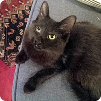 Adopt A Pet :: Lillia - Mississauga, Ontario, ON
