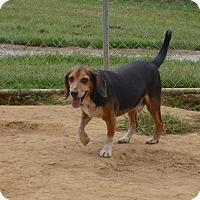 Adopt A Pet :: Benji - Charlemont, MA