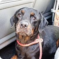 Adopt A Pet :: Emma - Gainesville, FL