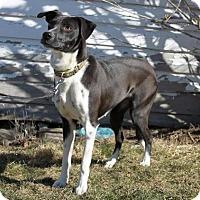 Adopt A Pet :: Oreo - Enfield, CT
