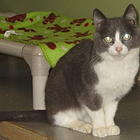 Adopt A Pet :: Maisy - Toledo, OH