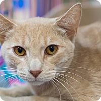 Adopt A Pet :: Luke - Modesto, CA