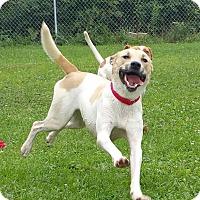 Adopt A Pet :: Nikki - Lisbon, OH