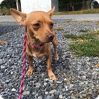 Adopt A Pet :: Grace Kelly - Staunton, VA