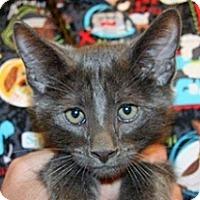 Adopt A Pet :: Frank - Wildomar, CA
