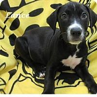 Adopt A Pet :: Lance - Bartonsville, PA