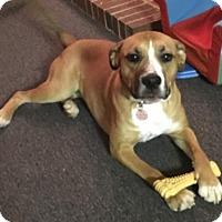 Adopt A Pet :: Daisy- Courtesy Listing - Fredericksburg, VA
